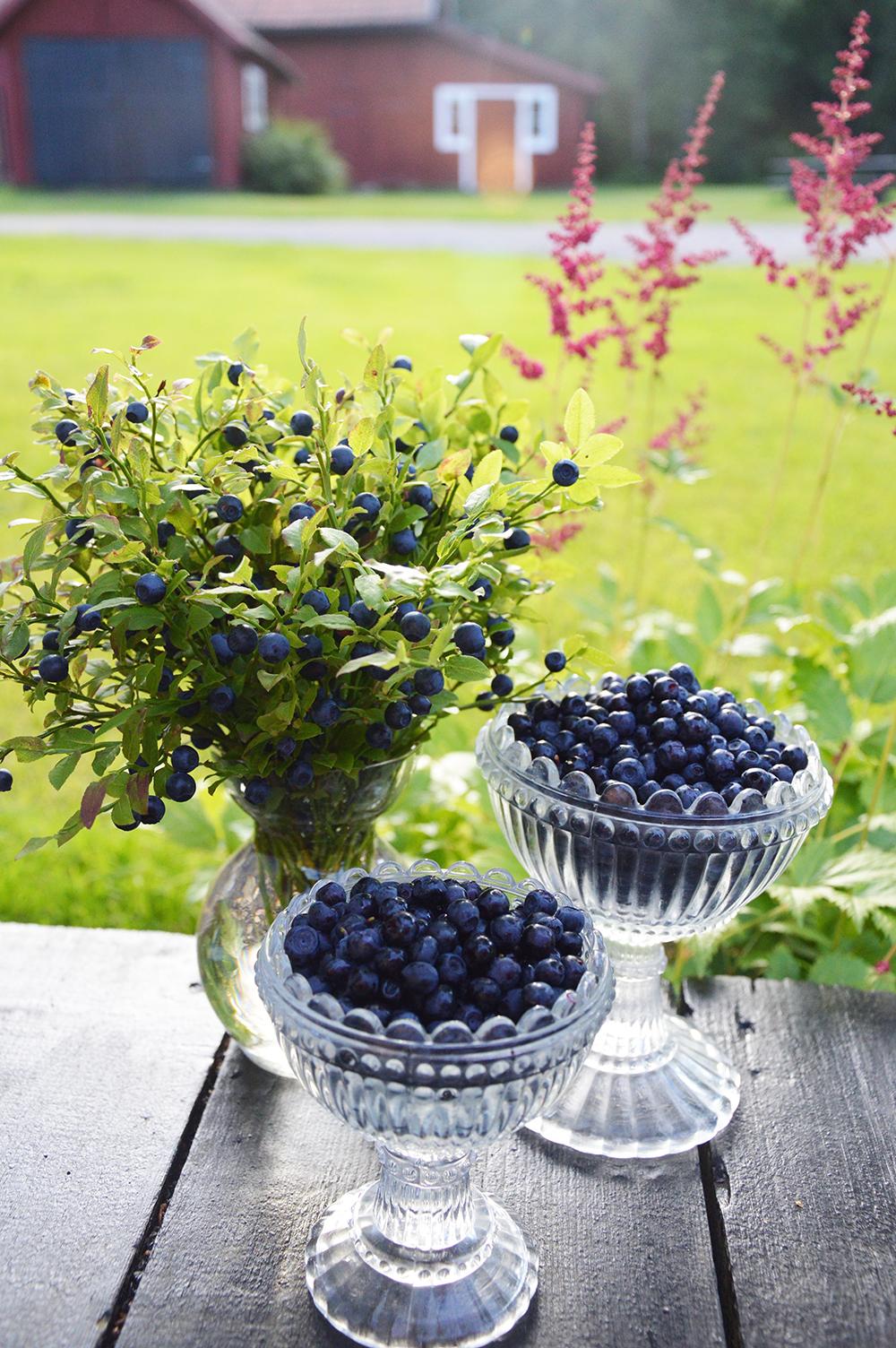 blåbär2